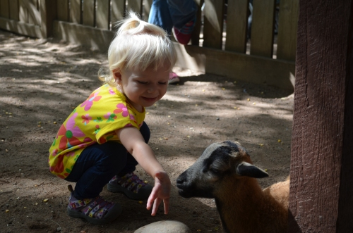 Cute baby goats, but Charlotte was more interested in the armadillo. And she's a little peeved that I didn't get any pictures of it.